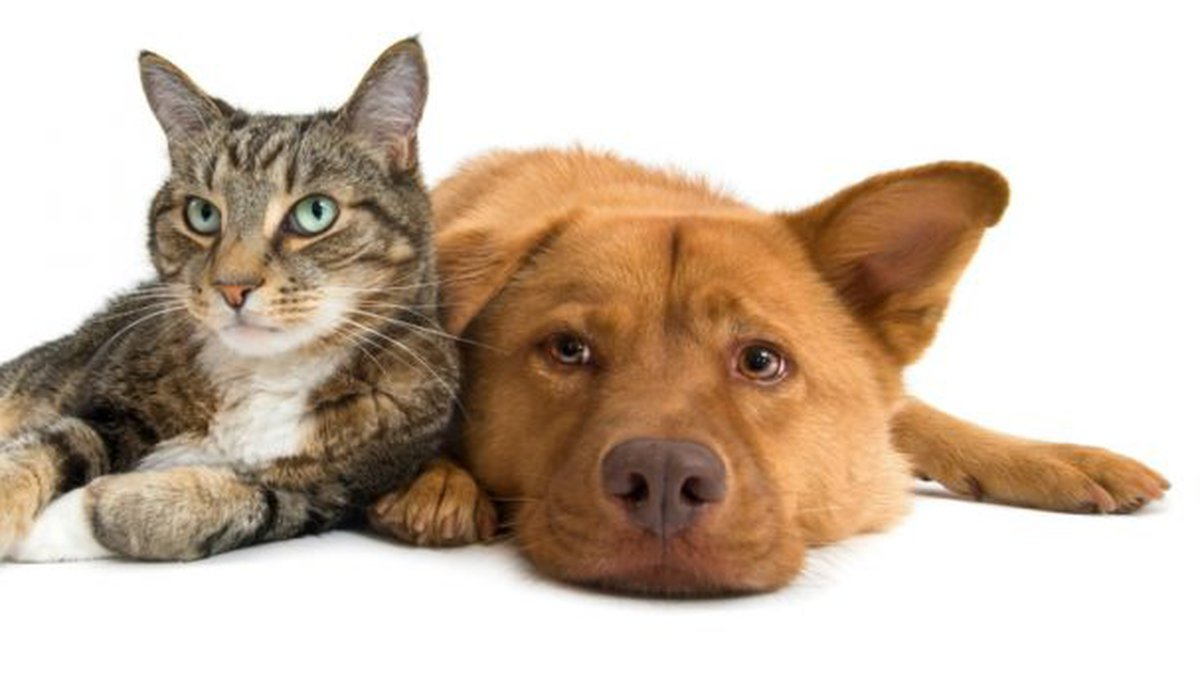 Huntsville Animal Services now has more than 50 felines available for adoption ranging from $5...