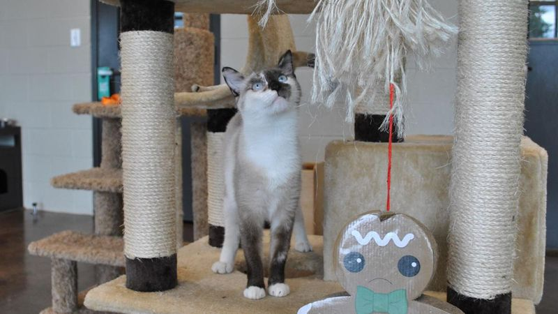 Cats for adoption at the Florence-Lauderdale Animal Shelter
