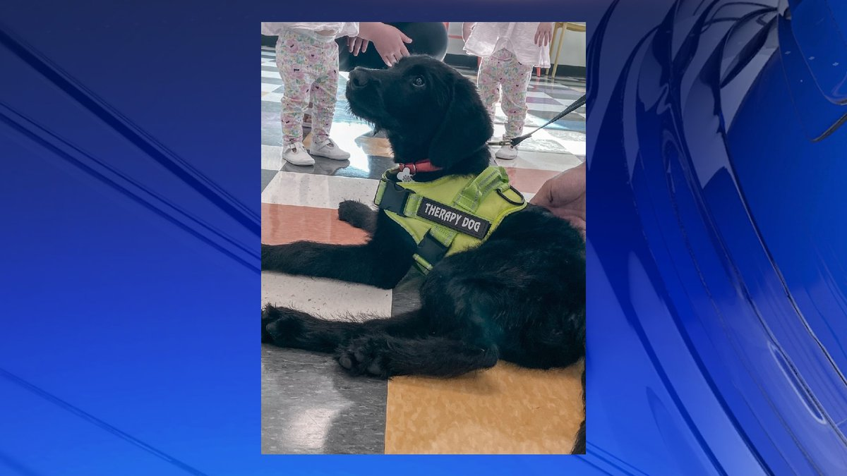 Shadow is the new service dog for DeKalb County.