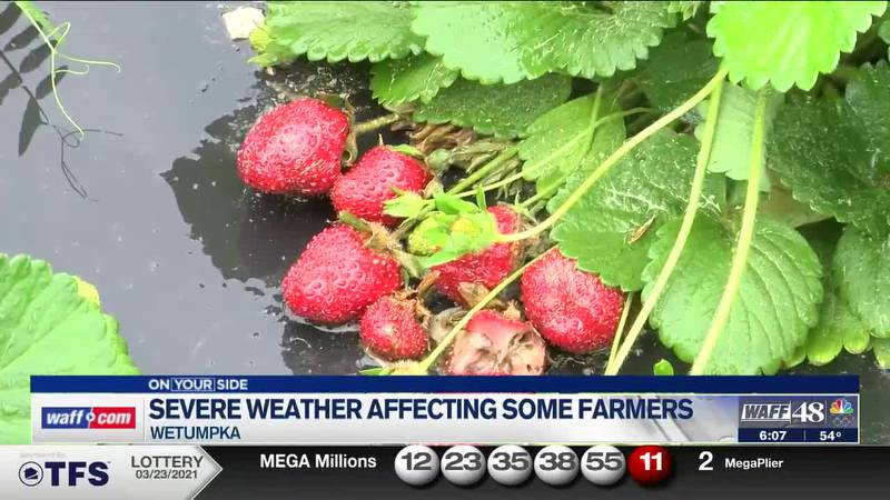 Severe weather impacting some farmers