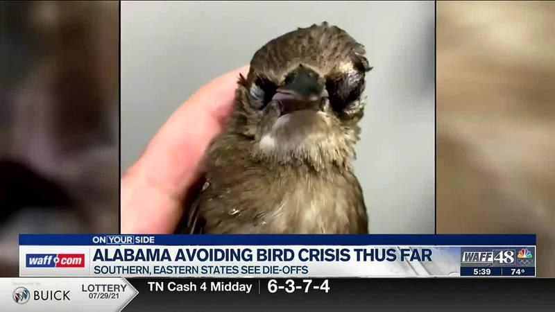 Alabama avoids bird crisis so far