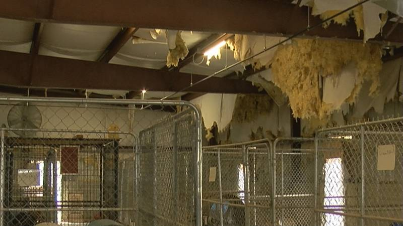 Shelter could get much needed renovations as early as Summer 2021.