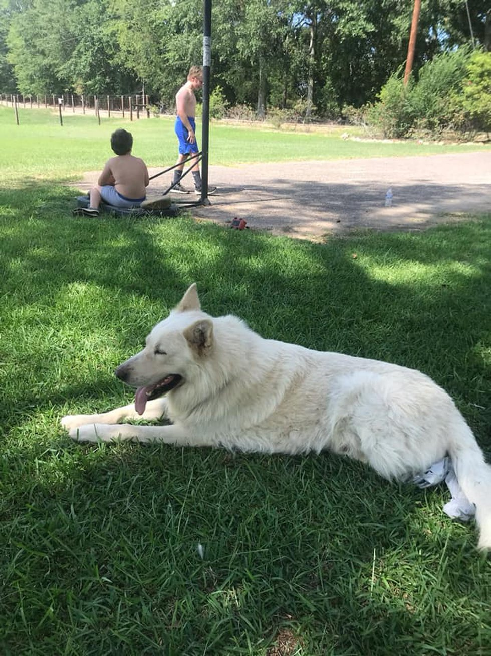 Spivey says the dog, Polar Bear, was a rescue. It took three people to pull the dog off of him....