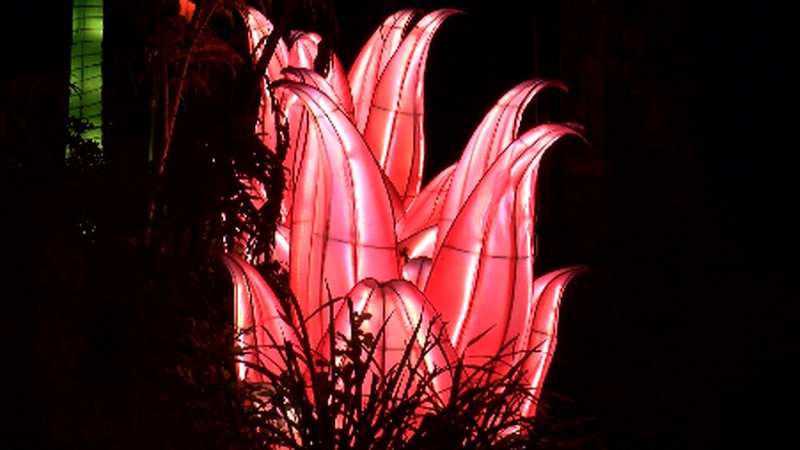 You can walk the one mile loop to enjoy thousands of lanterns.
