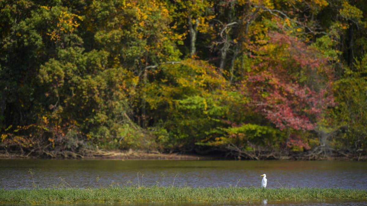 Flint Creek in Morgan County offers a getaway for canoes and kayakers [JERONIMO NISA/DECATUR...