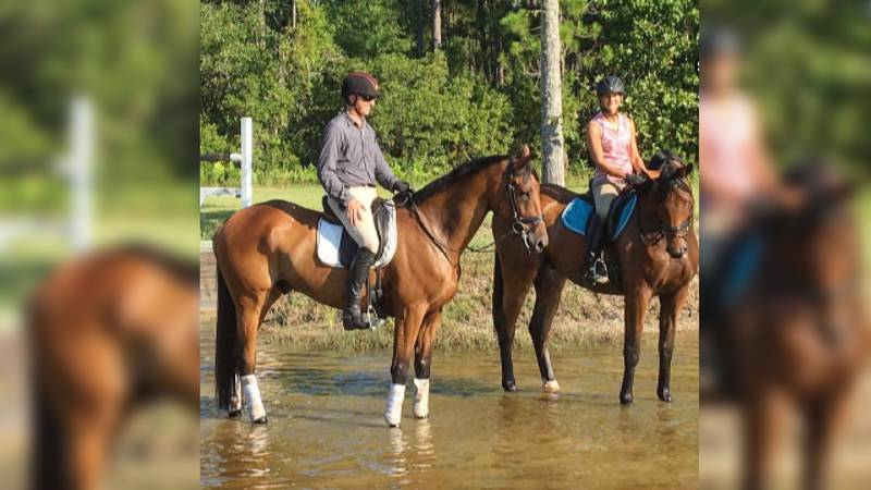 Elkmont colt, Vandiver (pictured left) is the oldest horse competing on the US Equestrian team...