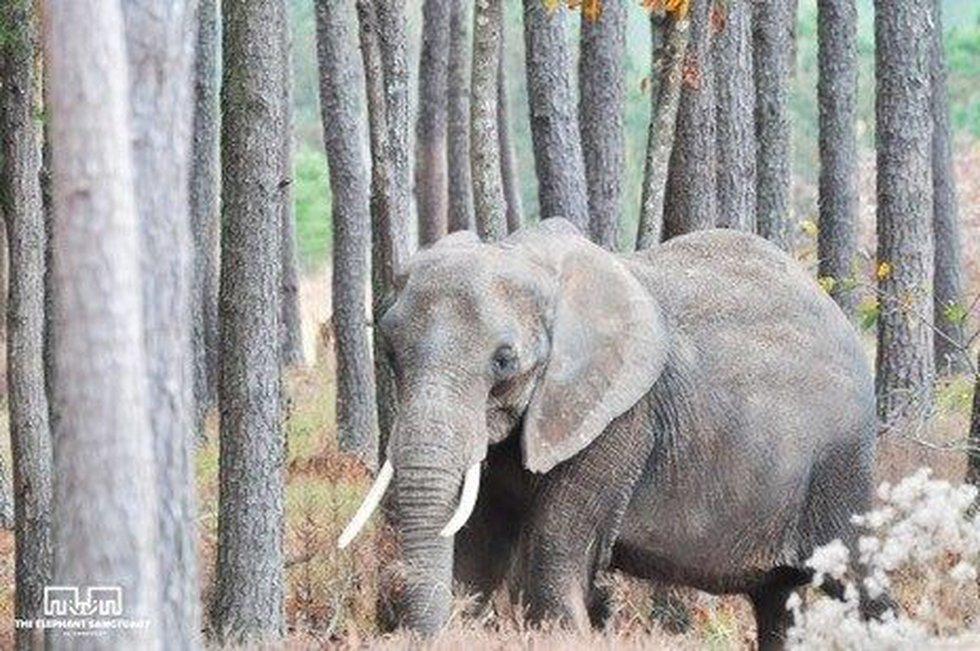 (Courtesy: The Elephant Sanctuary)