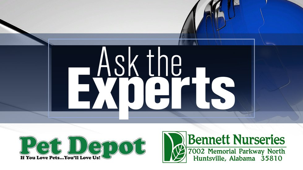 WAFF's Ask the Experts
