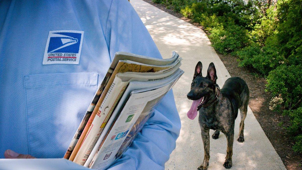 National Dog Bite Awareness Week