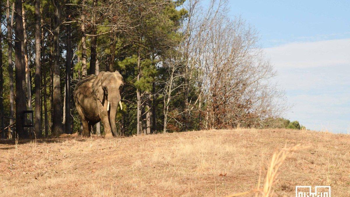 (Source: The Elephant Sanctuary)